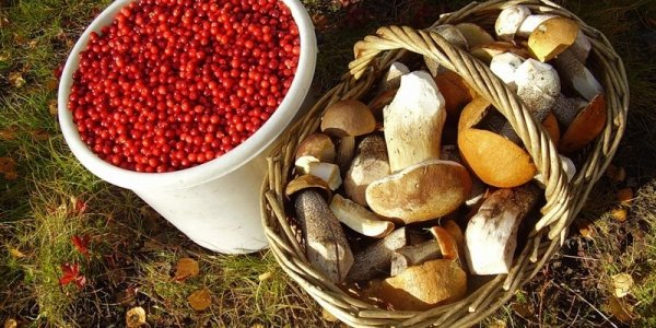 """В Лидском районе фирма закупала ягоды и грибы у """"мертвых душ"""""""