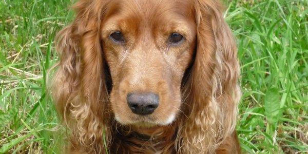 В Лиде украли собаку, которую хозяин оставил возле магазина