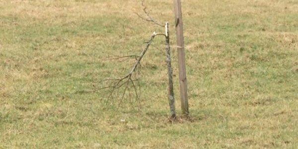 В парке у Кургана Бессмертия, ночью сломали более 30 молодых деревьев