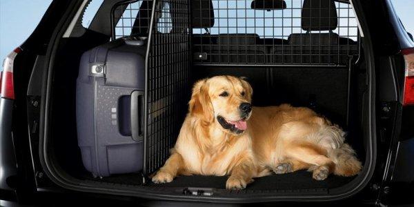Подготовка животных к транспортировке