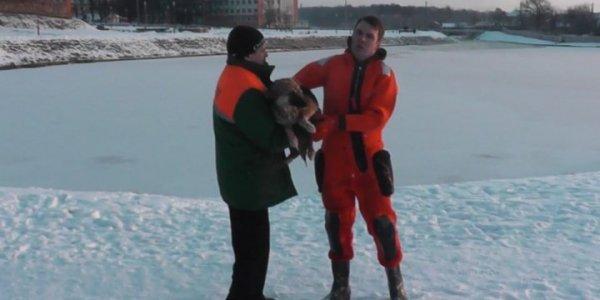 Сотрудник службы отлова в Лиде месяц кормил спасенную МЧС собаку своими обедами и искал ей хозяина