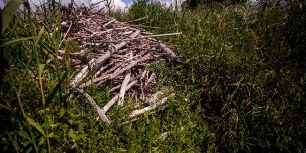 Уникальное болото в Лидском районе уничтожат ради торфа