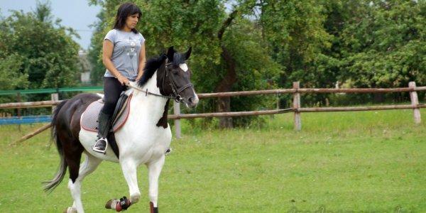 Как под Лидой работает конно-спортивная школа