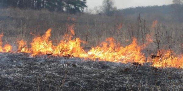 Водитель обнаружил обгоревший труп в Лидском районе