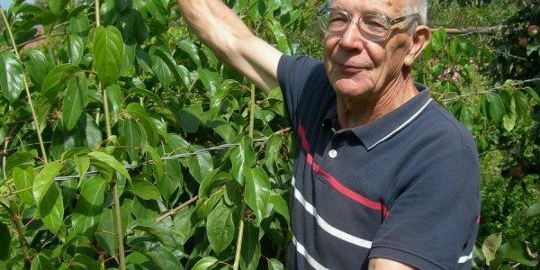 Виктор Гузенко из Лиды выращивает актинидию. Киви по-белорусски