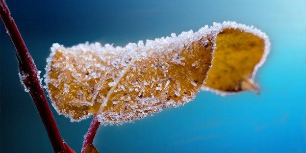 Грядут заморозки: синоптики рассказали о погоде в Беларуси до конца недели