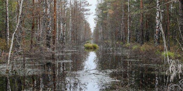Торфодобытчики и «зеленые» не могут поделить болото в Лидском районе