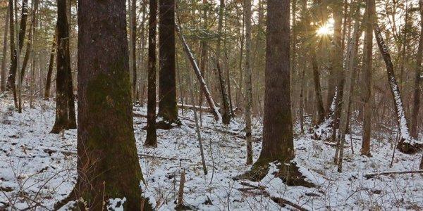 Останки пропавшего 10 лет назад мужчины нашли в лесу под Лидой