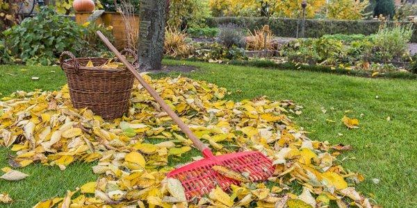 Осень в саду. Чем заняться на участке?
