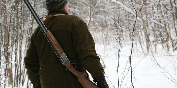 Недалеко от Березовки Лидского района, охотник повесил на дерево убитую лисицу