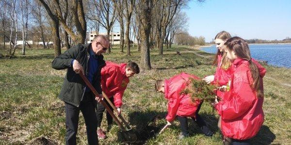 Вдоль Лидского озера высадили деревья