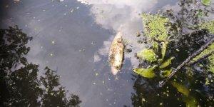 Из-за гибели рыбы в Дитве Лидский ЖКХ могут оштрафовать на 500 базовых