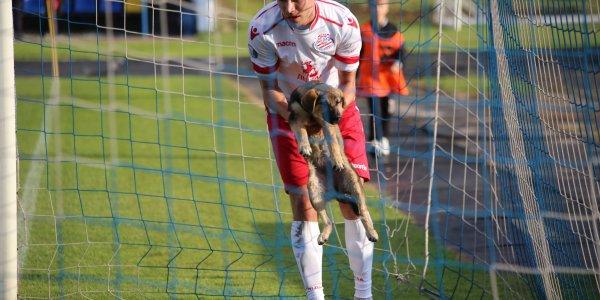 Во время матча между «Лидой» и «Белшиной» на поле выбежала собака