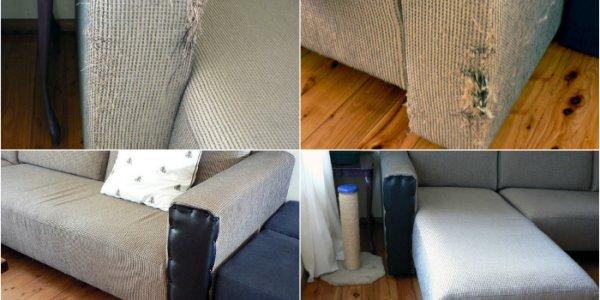 Что делать, если кошка испортила обивку дивана?