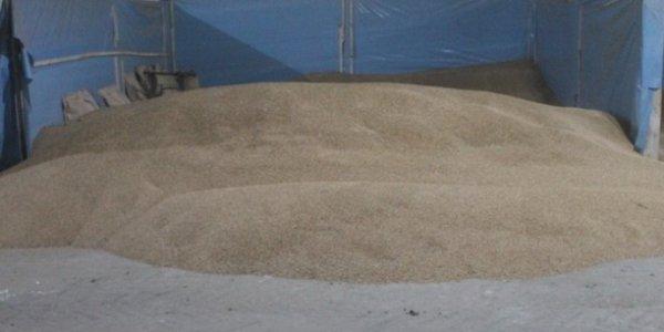 Бригадир в Лидском районе завезла себе на дачу 1,3 тонны тритикале