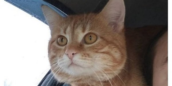 Лидский священник спас домашнего кота от своры собак (Видео)