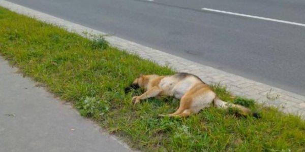 В Лиде хозяин выкинул мертвую собаку на тротуар