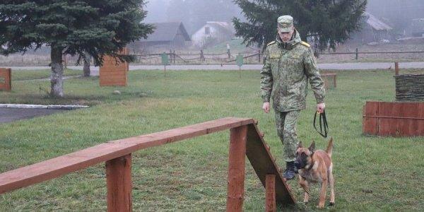 Военнослужащий Лидского пограничного одержал победу в международных соревнованиях по кинологическому биатлону
