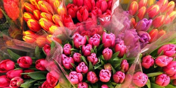 Как выбрать свежесрезанные цветы?
