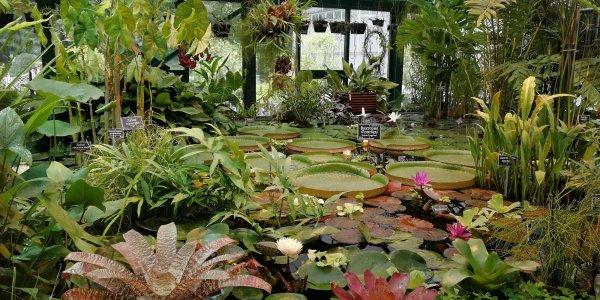 Оранжерея ботанического сада в Лиде будет сферической